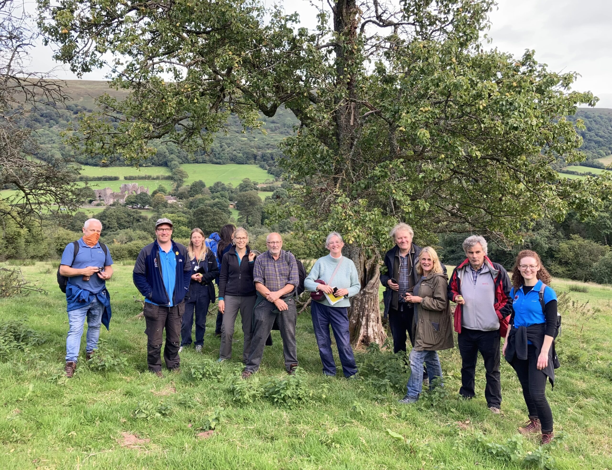Brecon Beacons Tree Wardens discover an ancient pear tree on their first official tree hunt above Llanthony Priory.