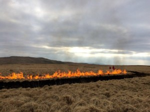 Controlled burning taking place on Penderyn Common