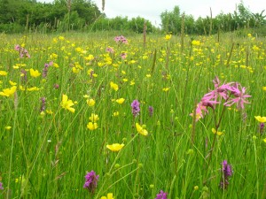 Ty Mawr fields (2)